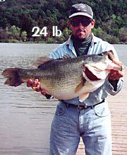 Name:  24-lb-bass.jpg Views: 1808 Size:  12.8 KB