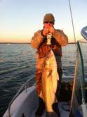 Name:  fish.jpg Views: 781 Size:  5.7 KB