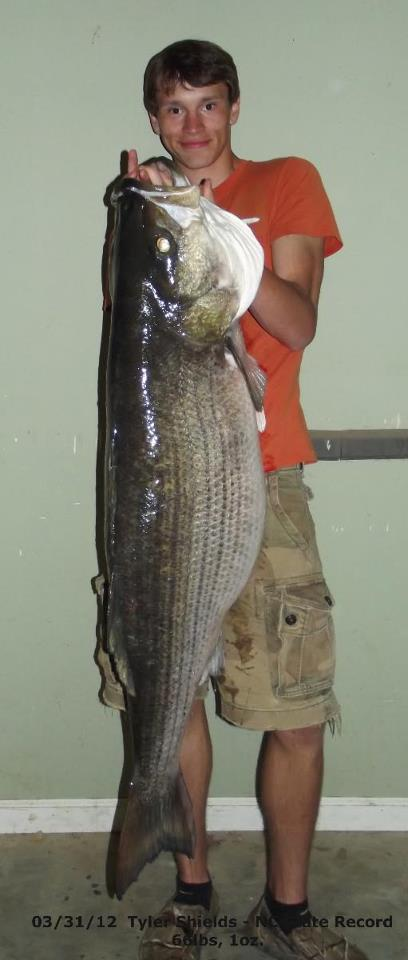 Click image for larger version  Name:fish3.jpg Views:90 Size:38.8 KB ID:15814