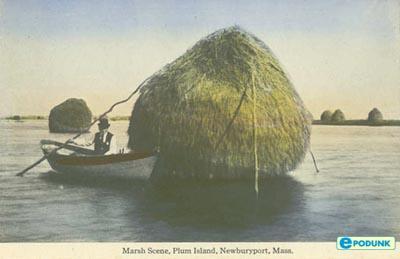 Name:  ma_plum_island01.jpg Views: 247 Size:  19.7 KB