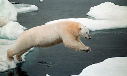 Click image for larger version  Name:polarbearjump.jpg Views:218 Size:15.2 KB ID:7066