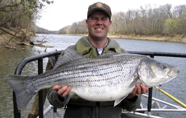 Click image for larger version  Name:roanoke-fish.jpg Views:4088 Size:77.7 KB ID:12827