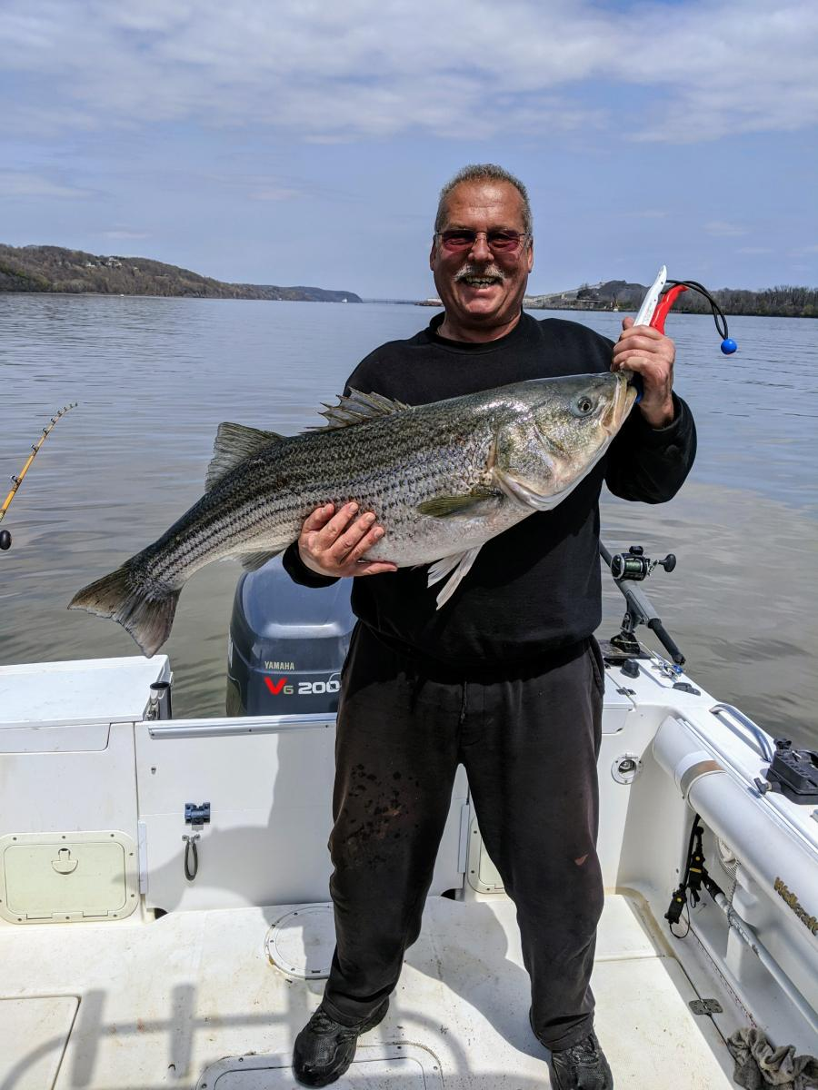 Click image for larger version  Name:striper 36lbs.jpg Views:28 Size:128.9 KB ID:36652
