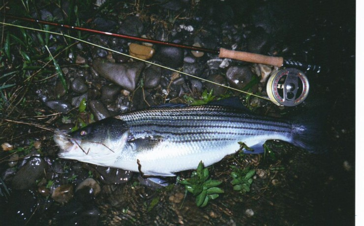 Click image for larger version  Name:striper1r.jpg Views:437 Size:94.3 KB ID:6335