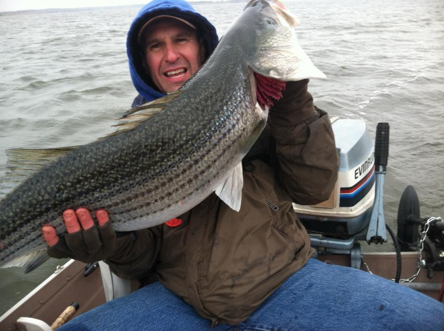 Click image for larger version  Name:striper2.jpg Views:66 Size:87.8 KB ID:15810