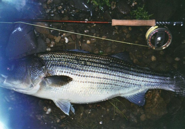 Click image for larger version  Name:striper2r.jpg Views:442 Size:103.8 KB ID:6334