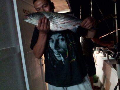 30 inch striper off long island sound