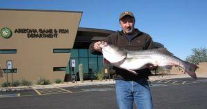 Arizona Inland record Striped Bass