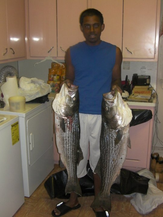 to big  spring stripers